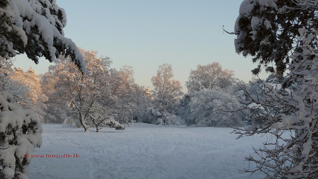 Photo:Winter in Holland, Snow covered forest Stuifheuvel, Zeist - 391 By:HereIsTom - Busy moving!