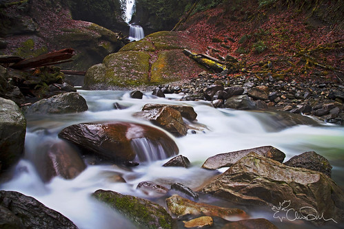 autumn trees winter wild plants creek waterfall washington state pacific northwest january falls evergreen waterfalls chase wilderness racehorse dekker