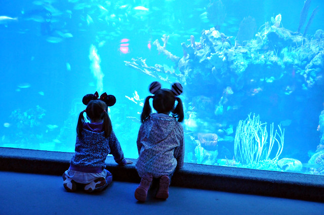 mice watching fish