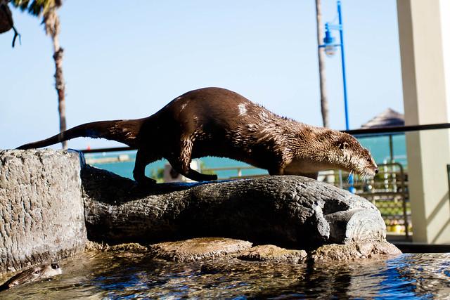 Texas State Aquarium-008.jpg