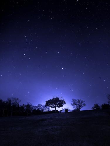 [フリー画像素材] 自然風景, 樹木, 夜空, 星, 風景 - 日本 ID:201302142000