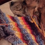Emo Dog is unimpressed with your colorful knitting