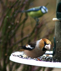 Winter bird feeders 02