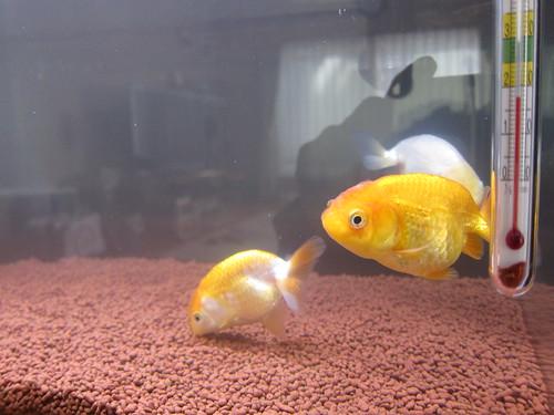 Aquarium Feb. 17, 2013 (3)