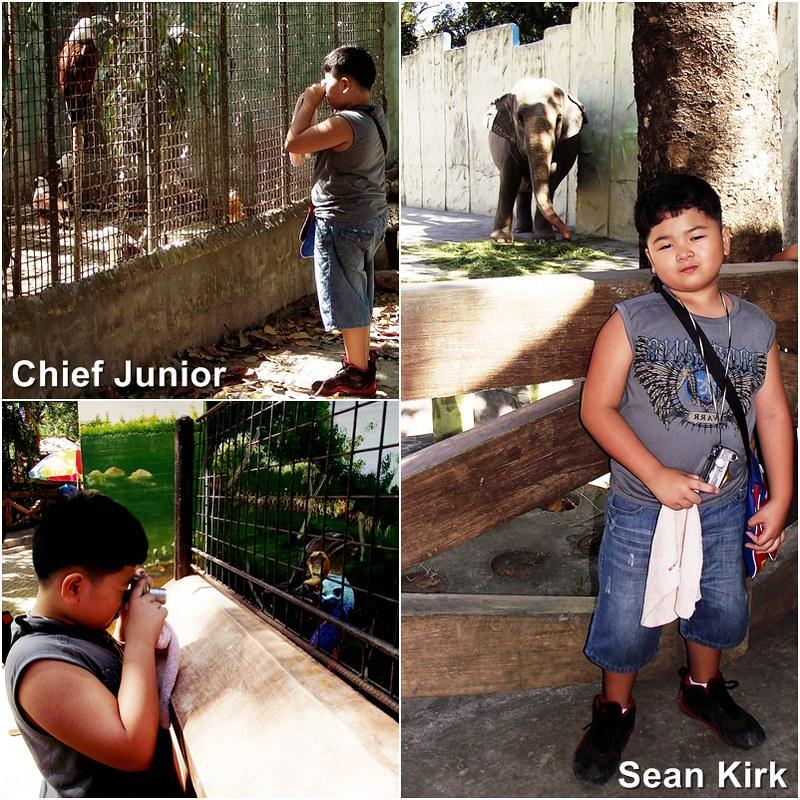 chief junior
