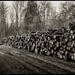 Lumber - Direct Positive. Felbrigg, Norfolk. by Paul Greeves