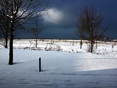 snow call