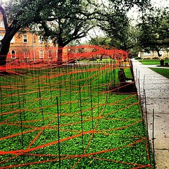 Whoa! #Tulane architecture installation on Academic Quad #TruTU #nola #architecture #college