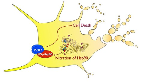 Death of a motor neuron