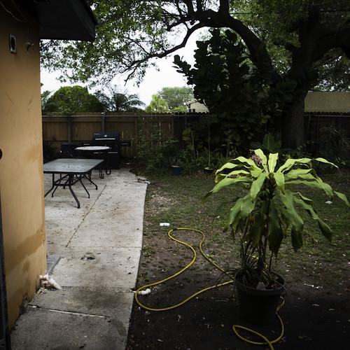 Backyard at Treeliion with Yellow Hose