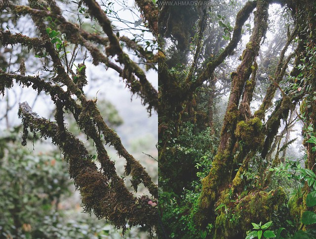 Travel Cameron Highlands 2013