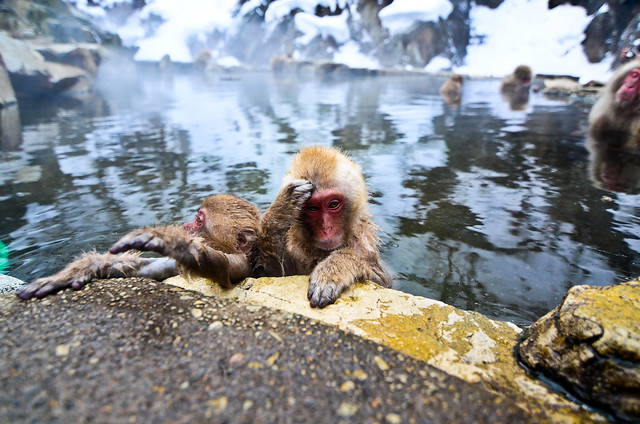 jigokudani SNOW MONKEYS!