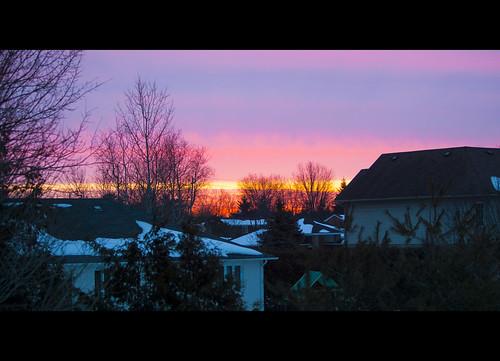morning blue trees sky urban orange sunrise dawn