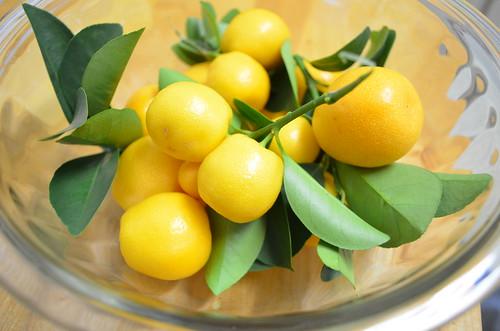 how to eat kumquats fruit