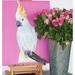 Kakadu with Roses