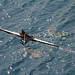 """單人雙槳赛艇 Single Scull Rowing"" / 香港水上體育運動 Hong Kong Water Sports / SML.20130316.7D.35141"