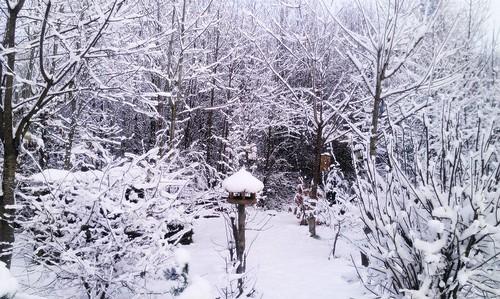 trees winter snow backyard frost bushes