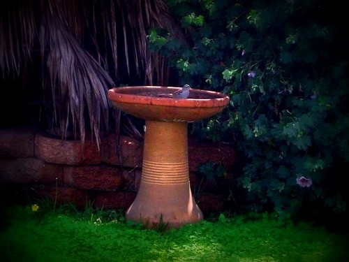 The Bird Bath