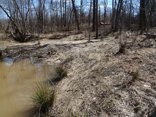 Photo set of Upper Northwest Branch Stream Restoration