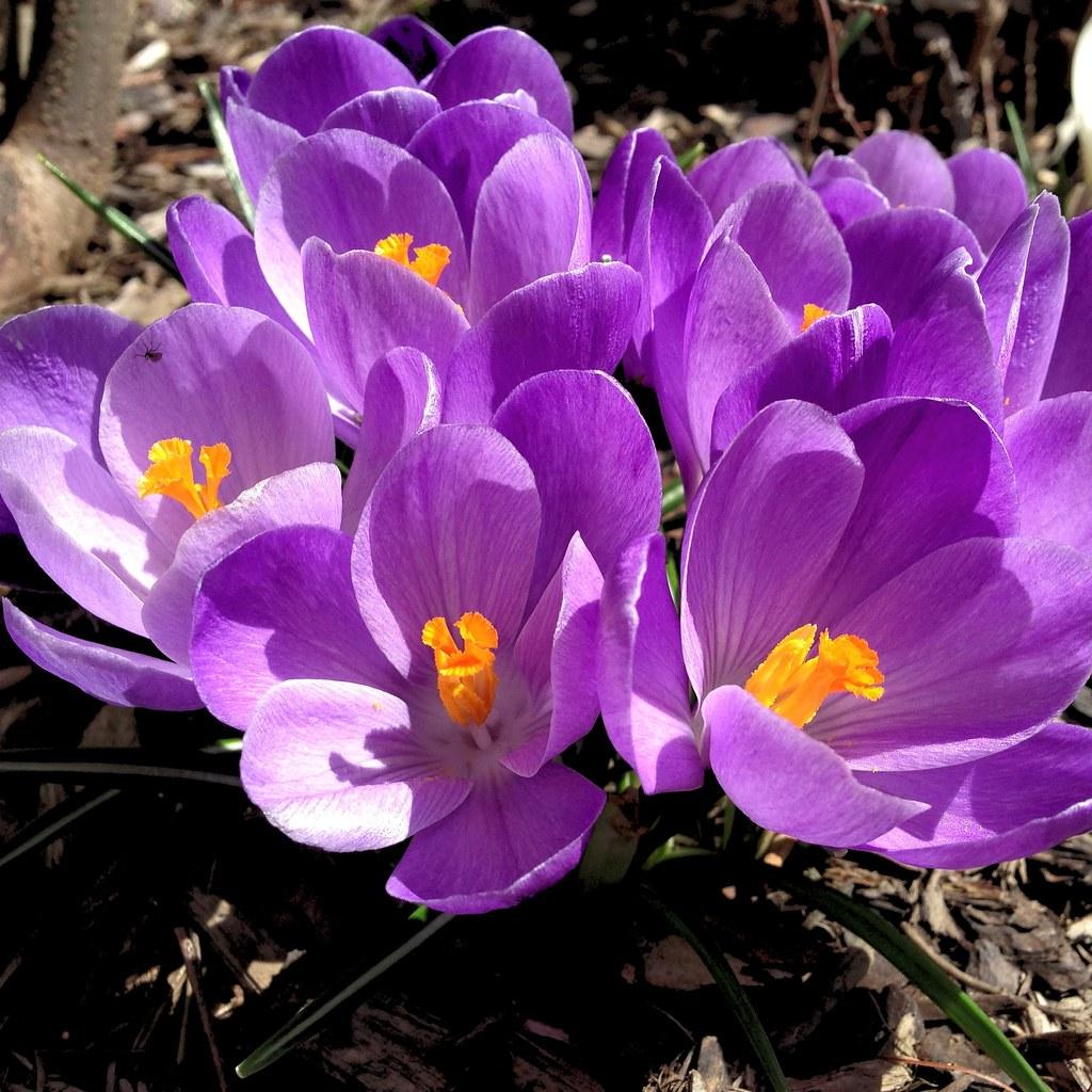 It feels like spring., 8594894175 086c62fdba b