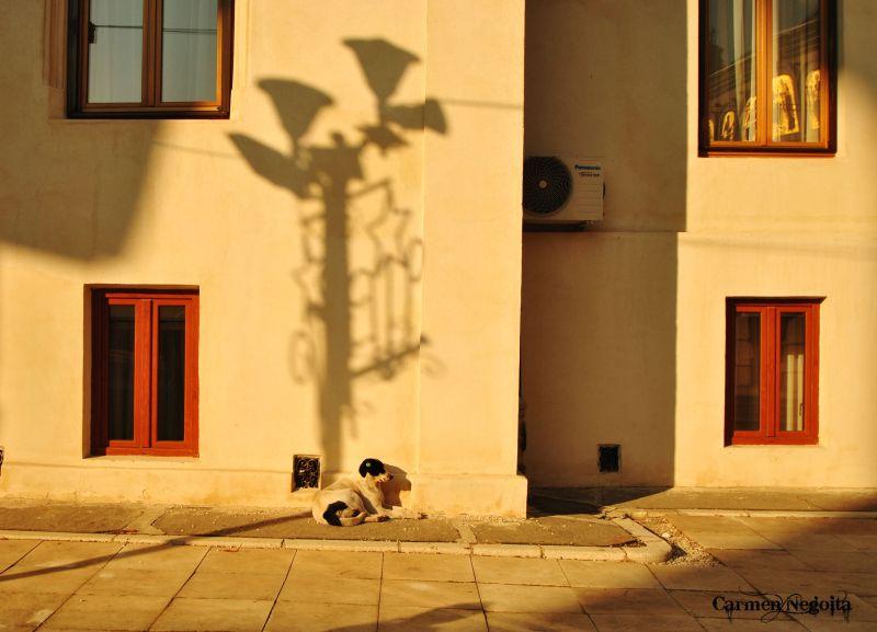 Bucuresti_Palatul Patriarhiei_16