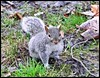 A squirrel at Hyde Park