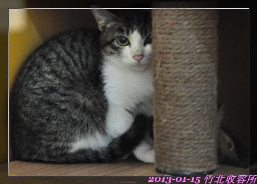 貓 (2)