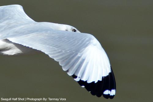 Seagull Half Shot QAspire Blog Tanmay Vora