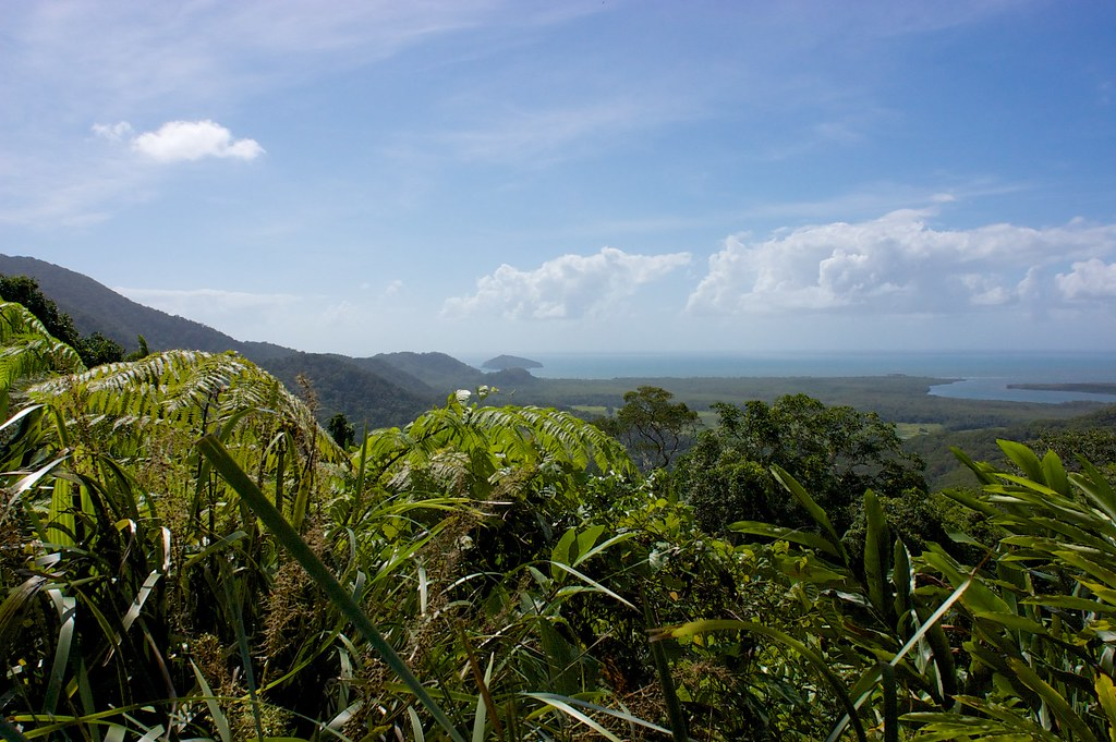 Looking out over the Daintree estuary