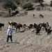 Herding the animals - Arreando los animales; cerca de San Juan Diuxi, Región Mixteca, Oaxaca, Mexico por Lon&Queta
