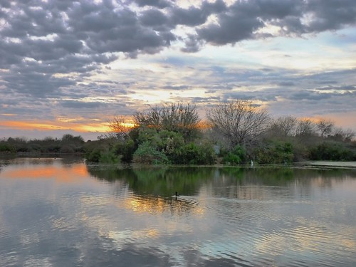 ranch morning trees arizona sky plants lake color reflection tree nature water ecology beautiful weather silhouette clouds sunrise landscape dawn early twilight pond colorful day alone quiet peace view cloudy horizon reflect gilbert serene bushes preserve placid daybreak riparian morn