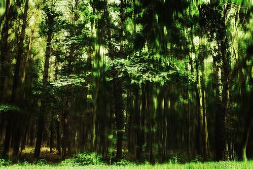 [フリー画像素材] 自然風景, 森林, 緑色・グリーン ID:201302110600