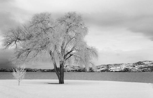 Chelan Winter