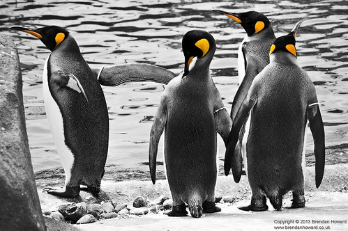 Penguins by Brendan_Howard