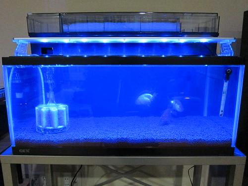 CLEAR LED 600 (BLUE)