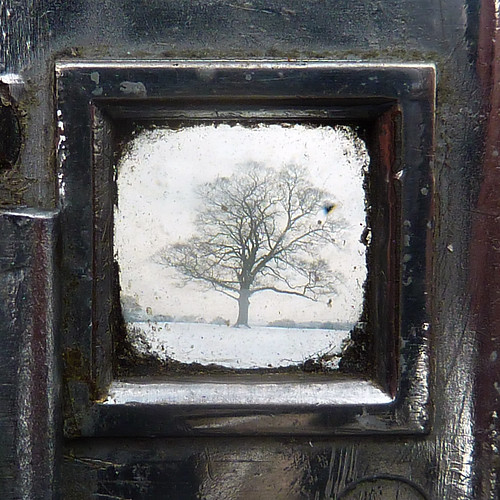 sycamore through the viewfinder by pho-Tony