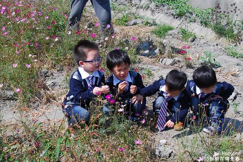 研究波斯菊種子的小孩們(3)