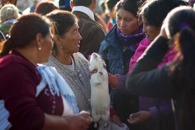 Marché des animaux d'Otavalo