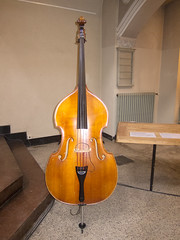 bowed string instrument, plucked string instruments, string instrument, violone, bass violin, double bass, cello, string instrument,