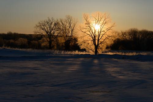 Fiery Tree_42663.jpg