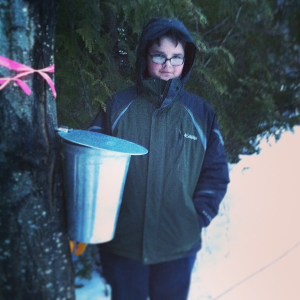 tapping our trees #maine #march #unschooling