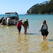 Small photo of Wading Ashore in Abel Tasman National Park