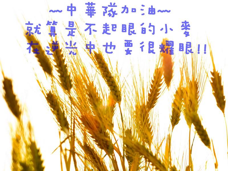 大雅小麥文化節- 中華隊加油 集氣!!!!