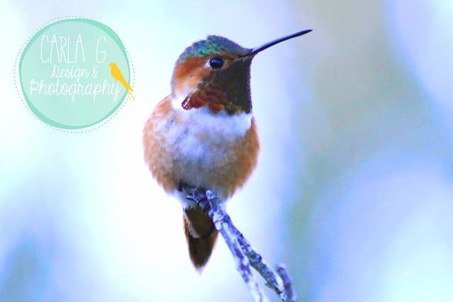 birds 077--edited_edited-1
