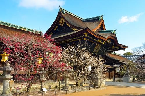 japan kyoto 京都 日本 北野天満宮 梅