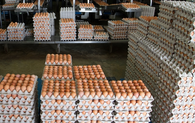 A fraction of the eggs that will be cracked for National Breakfast Day on 18 March 2013 (picture provided by McDonald's Singapore)