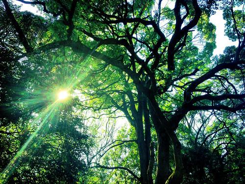 [フリー画像素材] 自然風景, 森林, 樹木, 緑色・グリーン, レンズフレア ID:201303201600