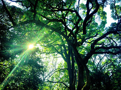 [Free Images] Nature, Forest, Trees, Green Color, Lens Flare ID:201303201600