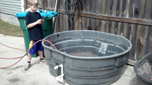 Cichlid Forum 300 Gallon Rubbermaid Growout Outdoors