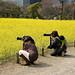 Japanese moms with their camera gear at Hamarikyu gardens, Tokyo